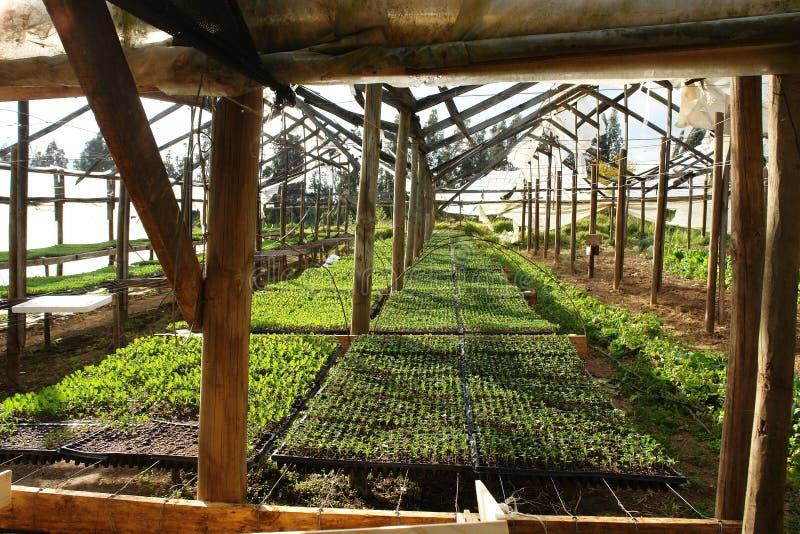 Invernadero de plantas imagen de archivo libre de regalías