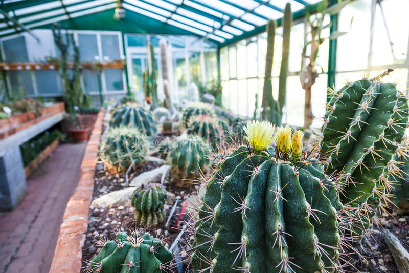 Download Invernadero del cactus imagen de archivo. Imagen de adentro - 42435963