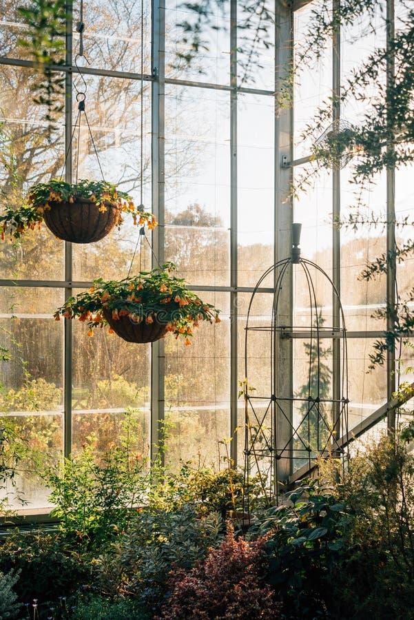 Invernadero en los jardines p?blicos en el Bronx, New York City de la colina de la onda fotos de archivo libres de regalías