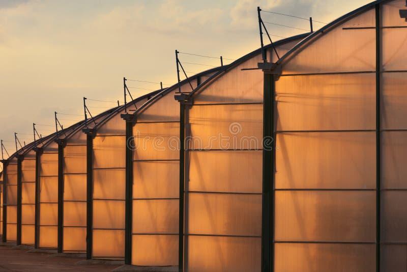 Invernadero industrial del gran escala encendido por el sunet fotografía de archivo libre de regalías