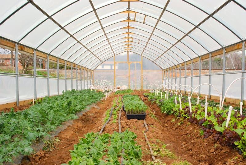 Invernadero orgánico fotos de archivo