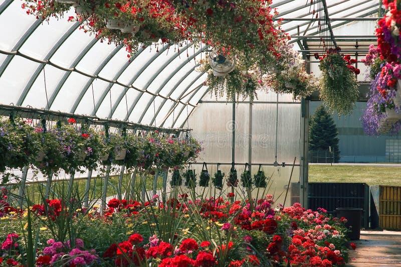 Invernadero por completo de flores fotos de archivo