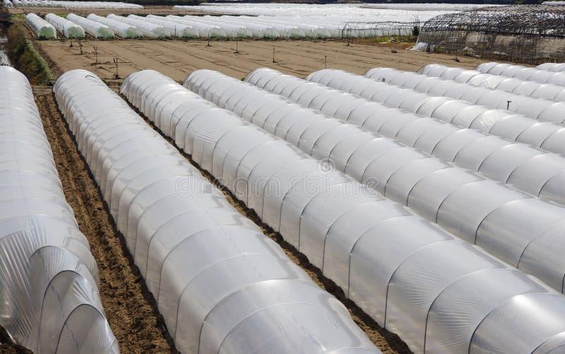 Invernaderos del PVC imagen de archivo
