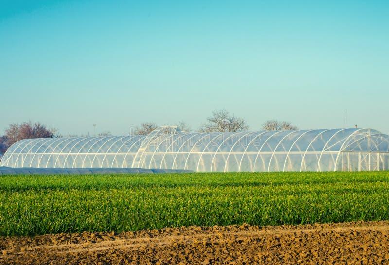 Invernaderos en el campo para los almácigos de las cosechas, frutas, verduras, prestando a los granjeros, tierras de labrantío, a imagen de archivo