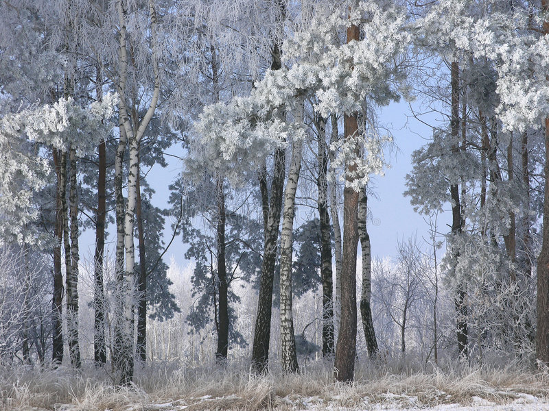 Download Inverno fotografia stock. Immagine di ruscello, strada - 3894690