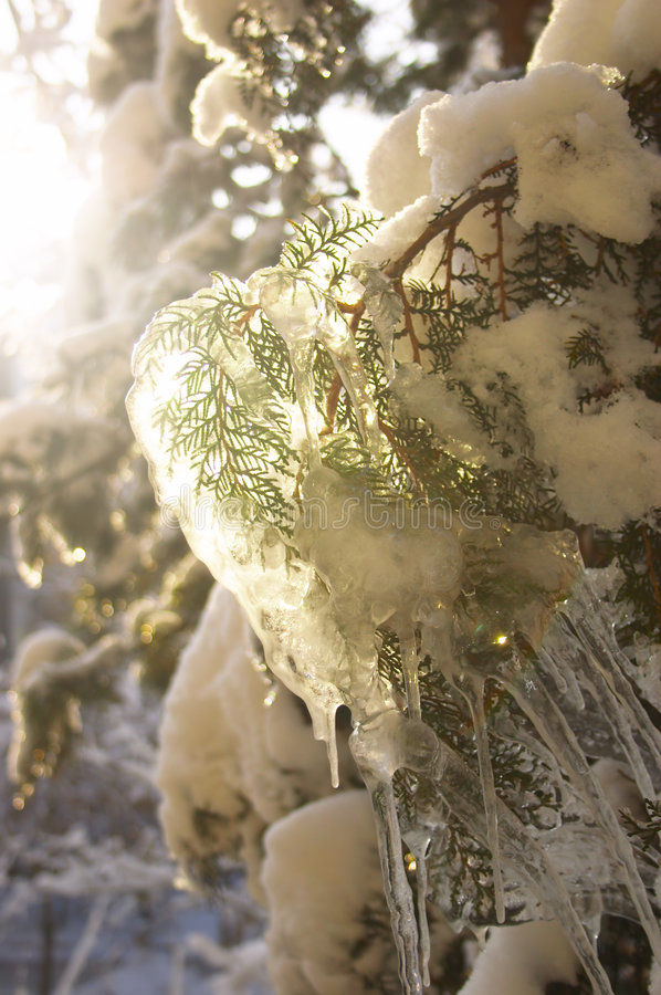 Inverno #4 fotografie stock