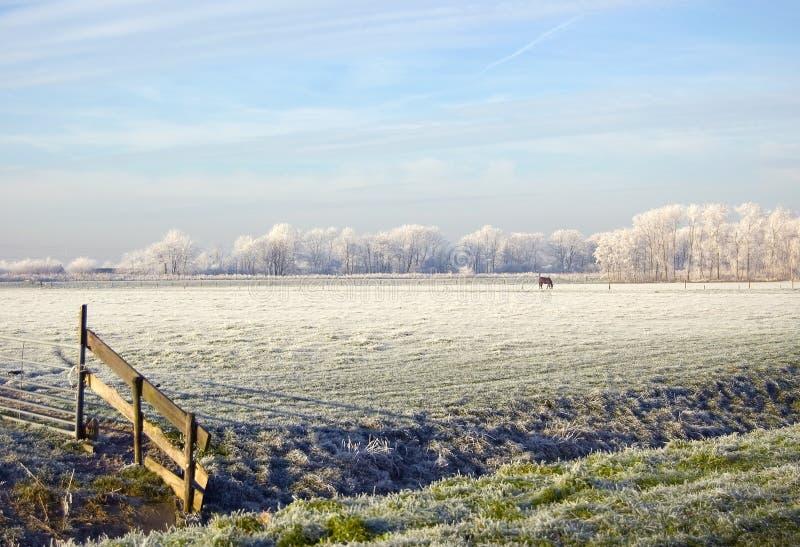 Inverno fotografia stock