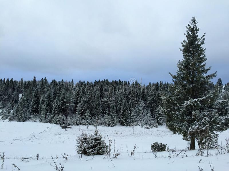 Inverno imagem de stock