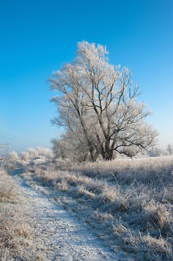Download Inverno immagine stock. Immagine di freddo, bianco, inverno - 56889497