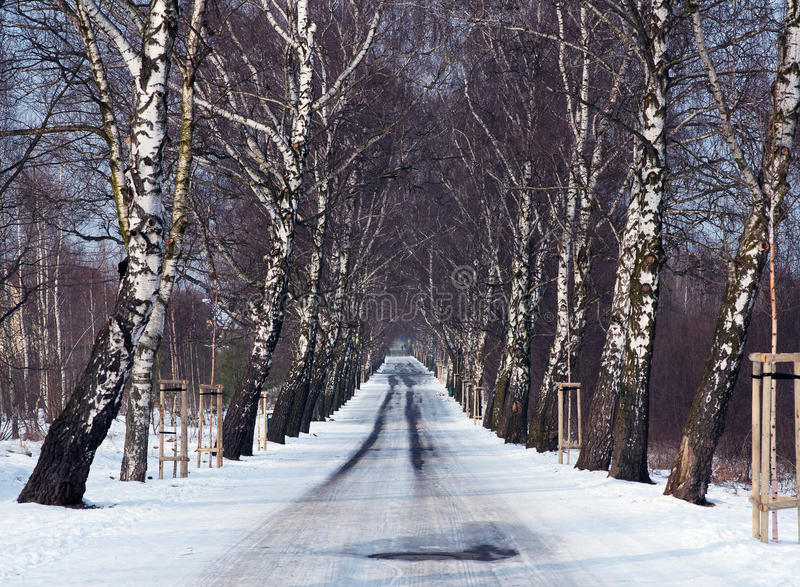 Download Inverno fotografia stock. Immagine di strada, neve, alberi - 56889800