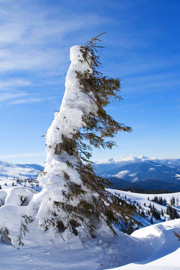 Download Inverno fotografia stock. Immagine di background, stagionale - 7307104