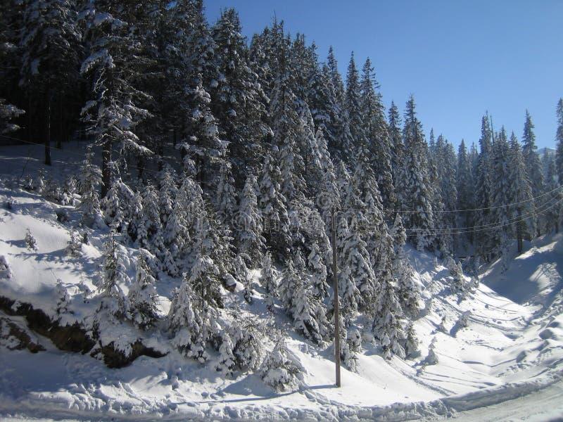 Download Inverno fotografia stock. Immagine di ucraina, ombra, gelo - 7322960