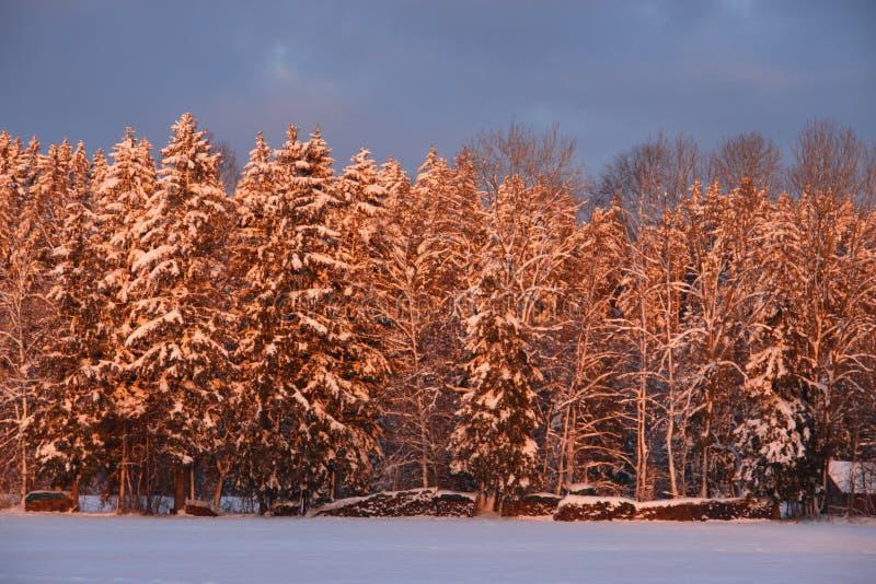 Download Inverno fotografia stock. Immagine di orizzontale, nave - 7324484