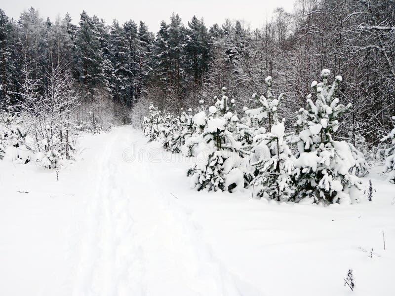 Inverno immagine stock