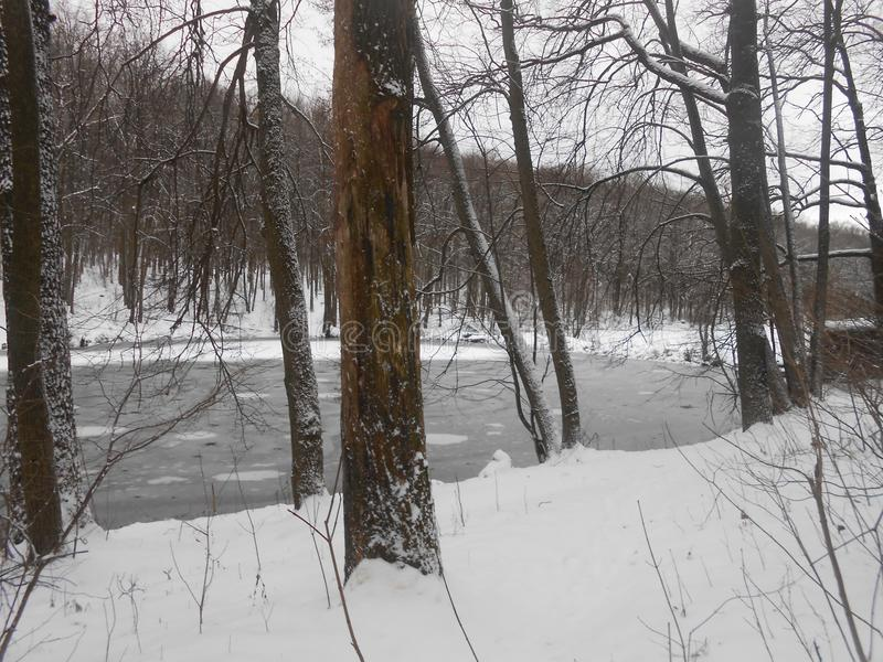 Inverno in anticipo Stagno nella foresta fotografia stock libera da diritti