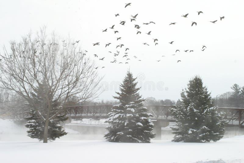 Inverno bianco immagine stock libera da diritti