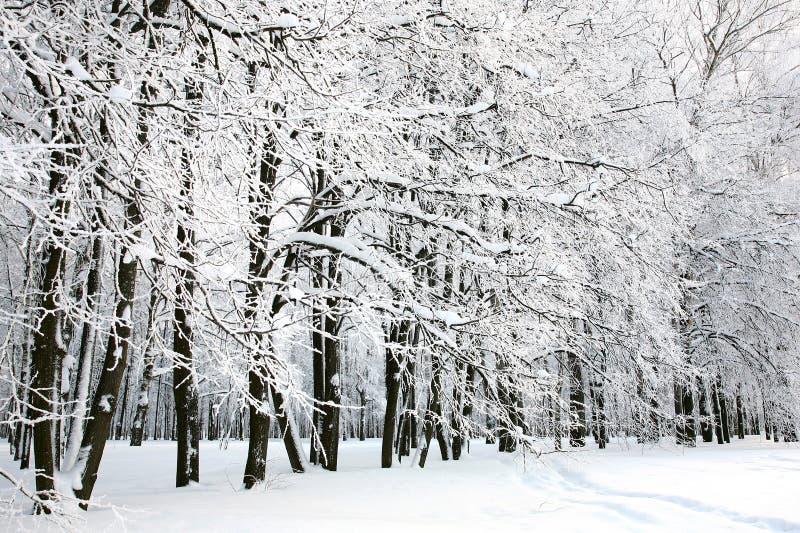 Inverno bonito do russo fotos de stock royalty free
