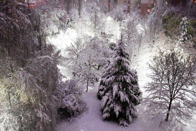 inverno bonito em um parque fotos de stock