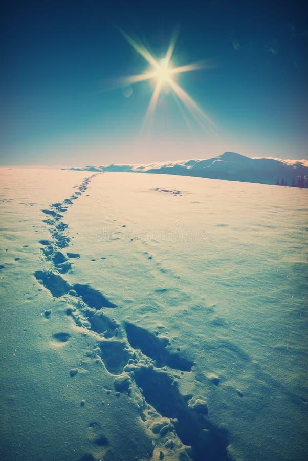 inverno bonito no montanhas Carpathian fotografia de stock