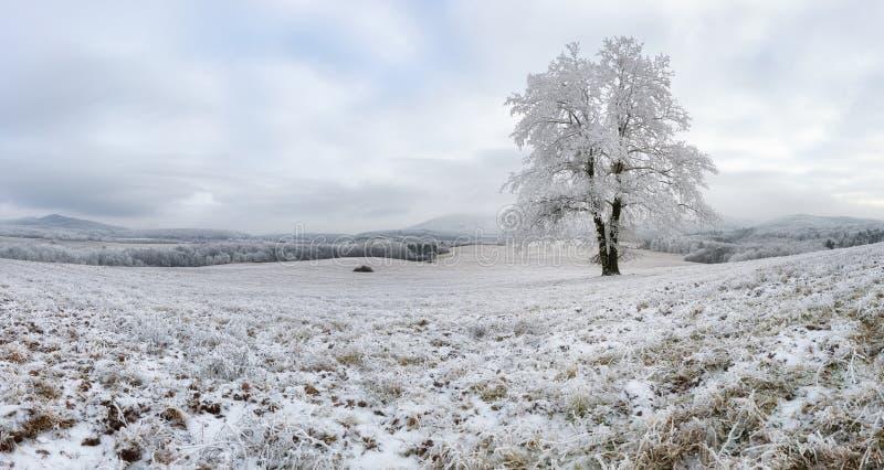 inverno com a árvore congelada sozinha, paisagem da natureza do panorama imagens de stock royalty free