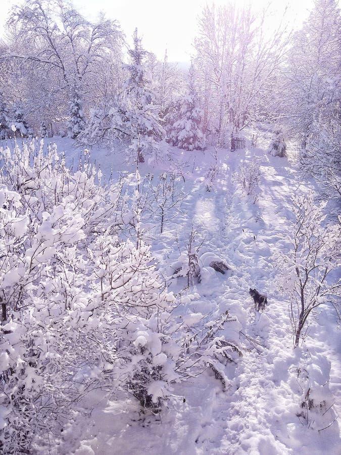 inverno com muita neve muito branca com um cão preto imagens de stock