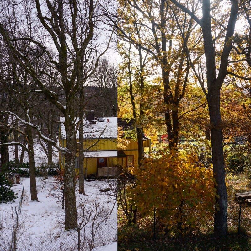 Inverno contro Autum immagine stock libera da diritti