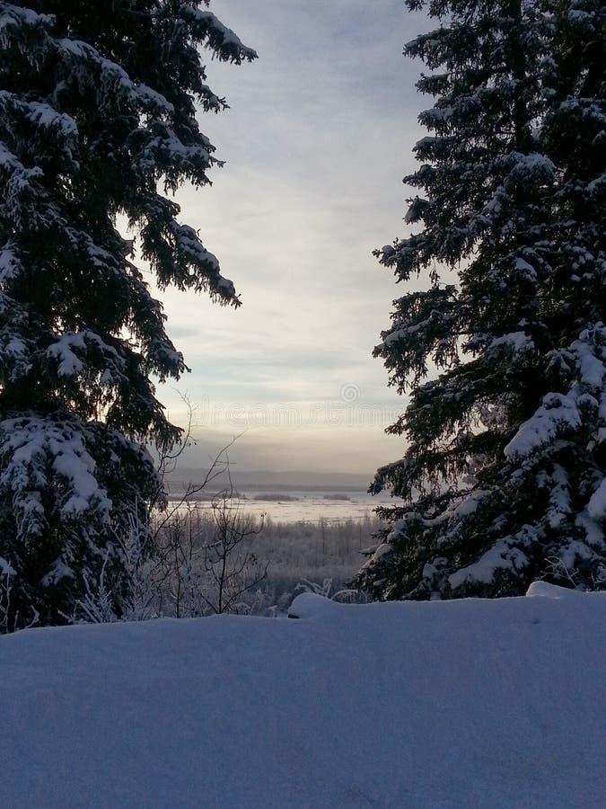 Inverno d'Alasca immagini stock