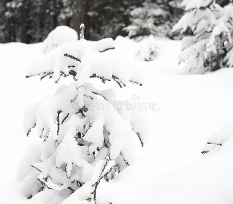 Inverno da árvore fotografia de stock royalty free