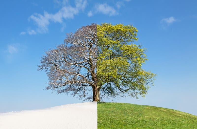 Inverno da árvore da colagem contra o verão fotografia de stock royalty free