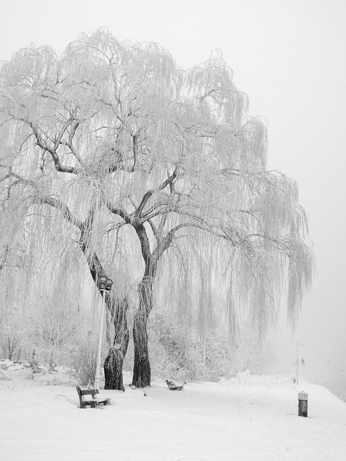 inverno da natureza fotografia de stock royalty free