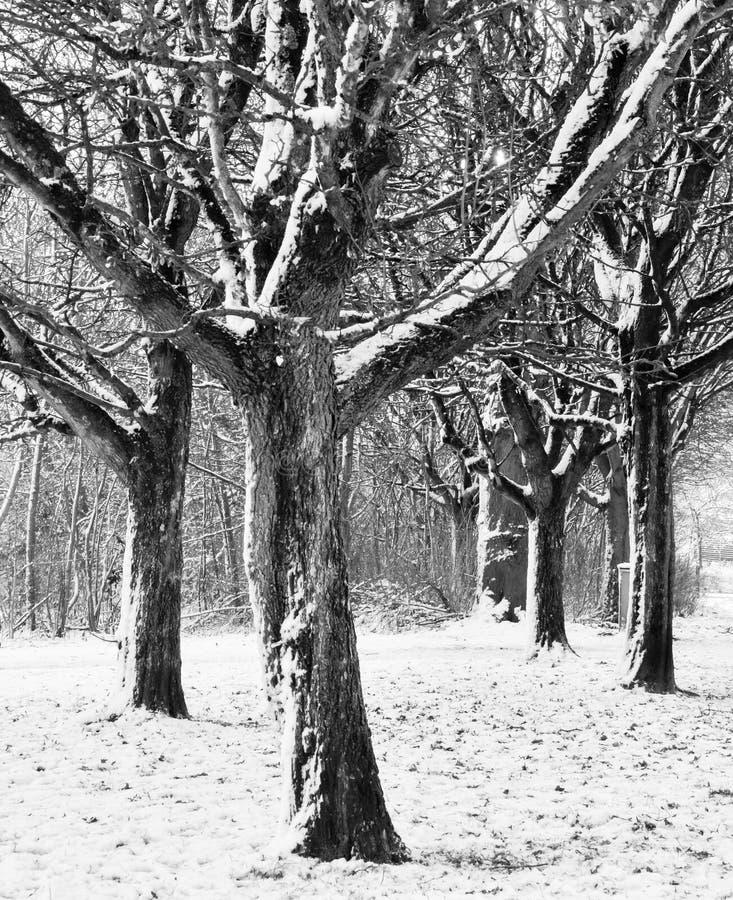 Inverno danese nel parco fotografia stock