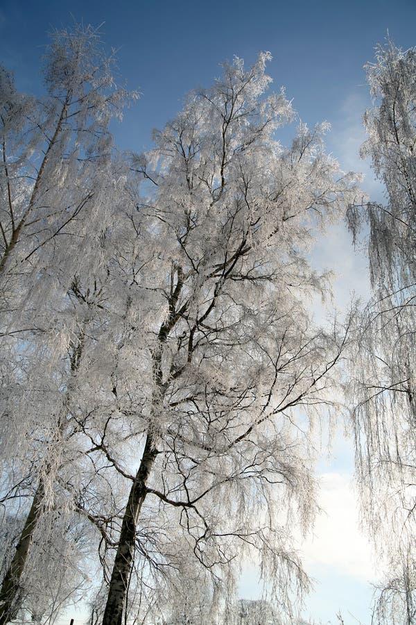 Inverno in Danimarca fotografie stock