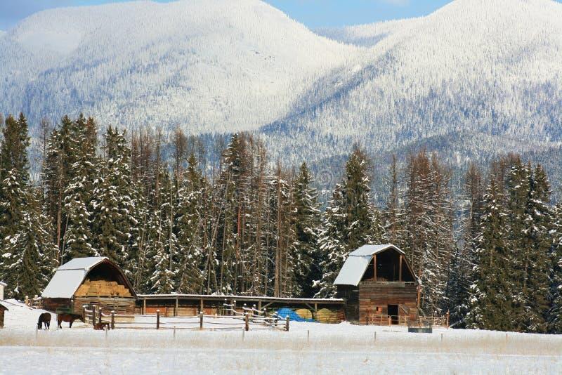 Inverno de Montana imagem de stock royalty free