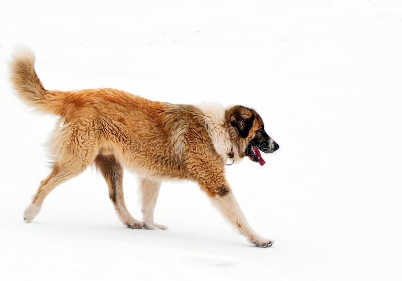 Inverno del cane