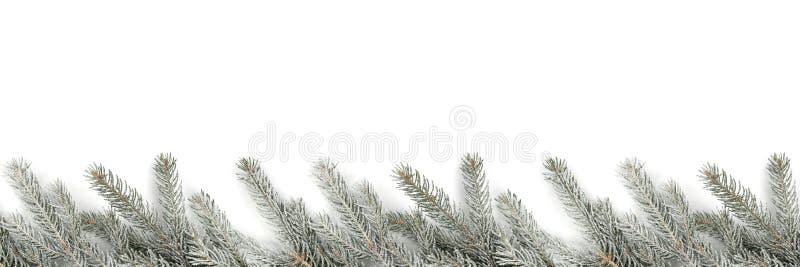 Inverno della neve dei rami di albero dell'abete della decorazione di Natale isolato su w fotografia stock