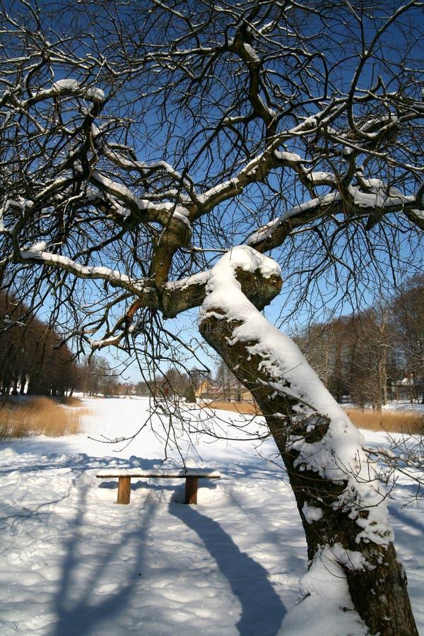 Inverno dello Snowy fotografie stock