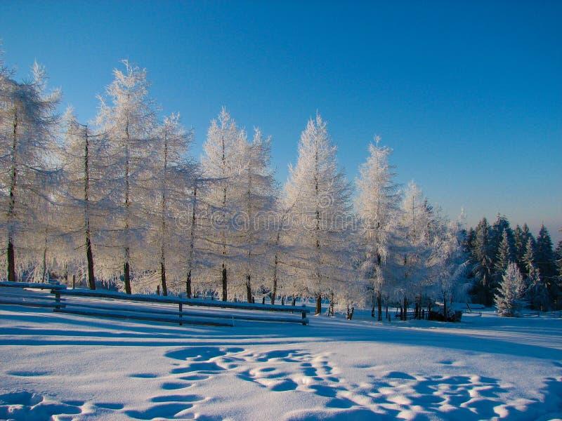 Inverno di Amazig fotografia stock
