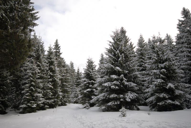 Inverno di Harz fotografia stock