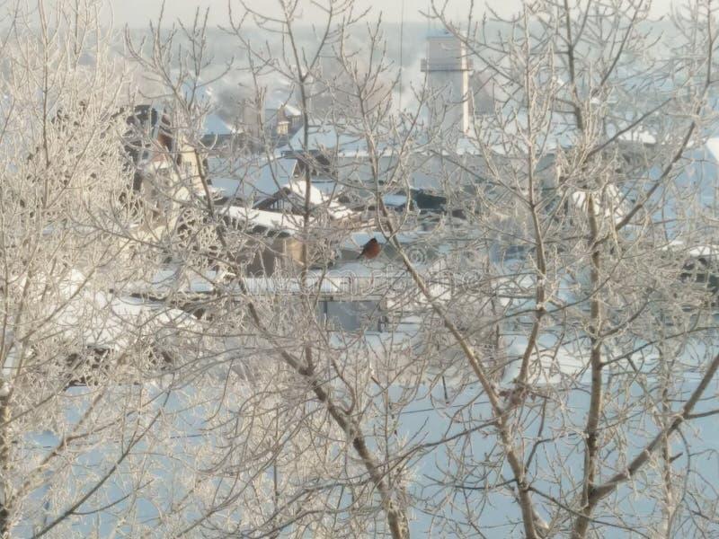 Inverno di primo mattino fotografia stock