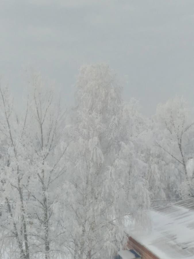 Inverno di primo mattino immagini stock libere da diritti