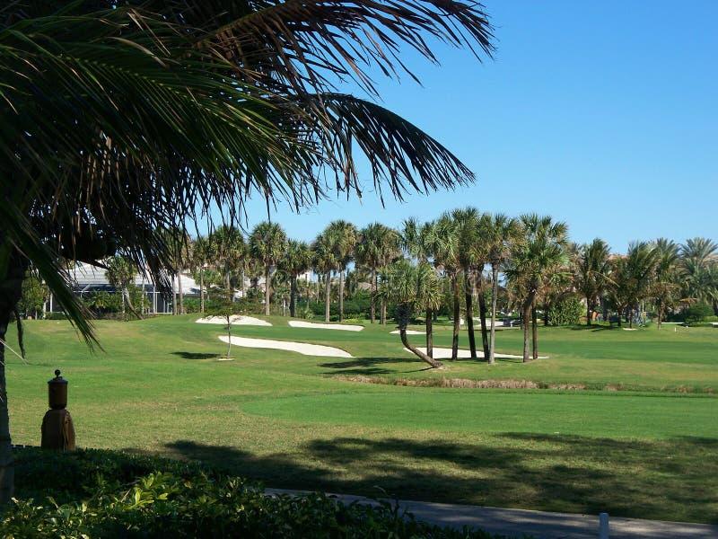 Inverno di terreno da golf in Florida immagini stock libere da diritti