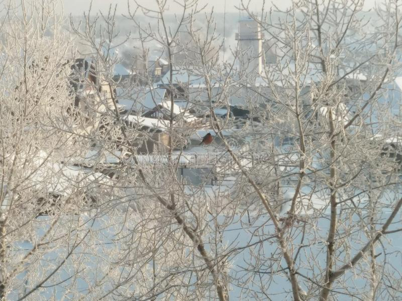 inverno do amanhecer foto de stock