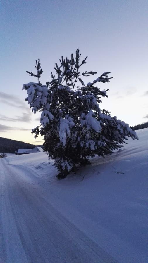 inverno do por do sol foto de stock royalty free