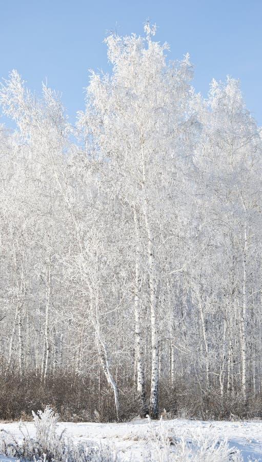 Inverno do russo foto de stock royalty free