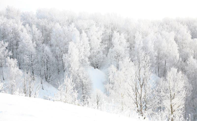 Inverno do russo na floresta imagem de stock royalty free