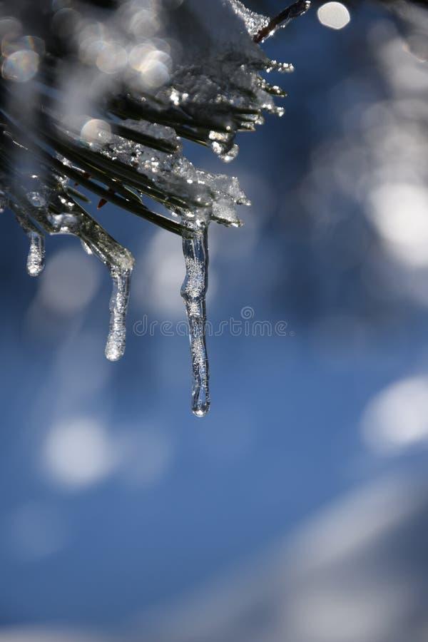 inverno do sincelo fotos de stock