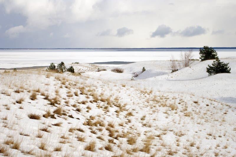 Inverno em dunas inoperantes fotos de stock royalty free