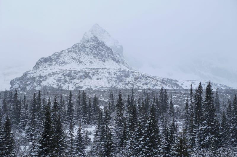 Inverno em montanhas de Tatra fotos de stock
