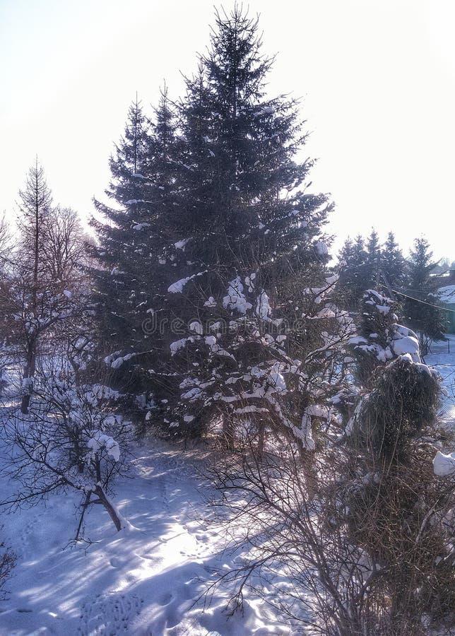 inverno ensolarado nevado imagem de stock