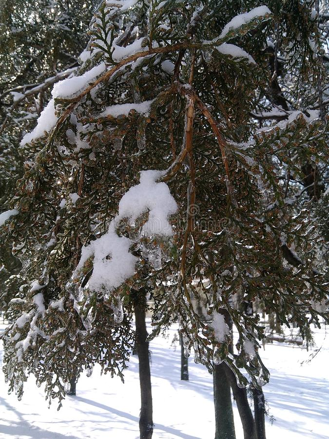 inverno feericamente, tudo no gelo foto de stock